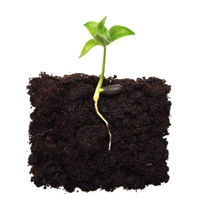 Five Keys to Successful Seed Starting