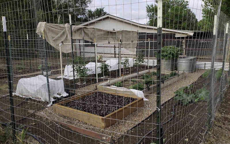 garden in minutes in yard