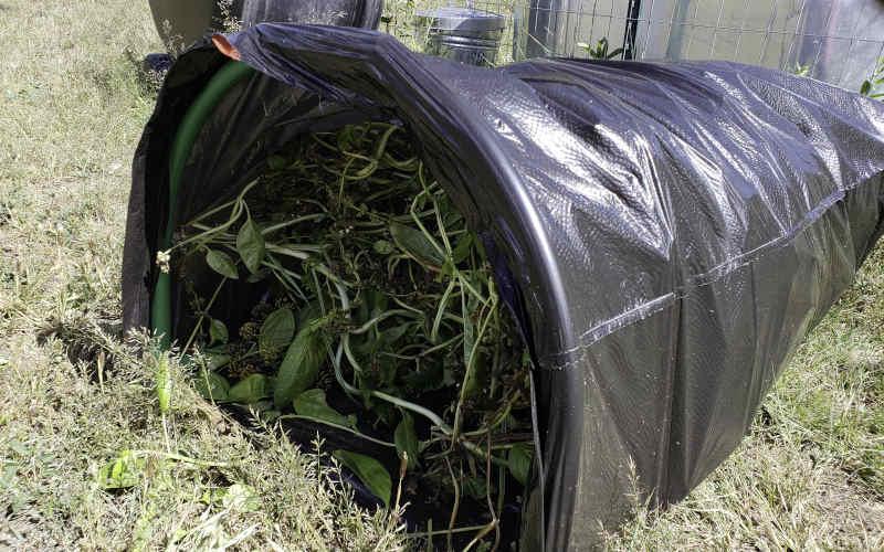 Raking plant material into the Leaf Gulp