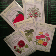 Zinnia seeds from Renees Seeds