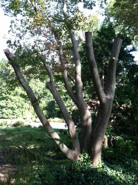 Badly pruned tree