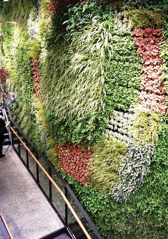 Benefits of a living wall