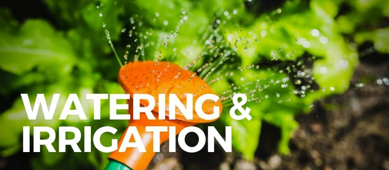 watering can sprinkling water for gardening products review
