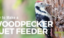 How to Make a Woodpecker Suet Feeder