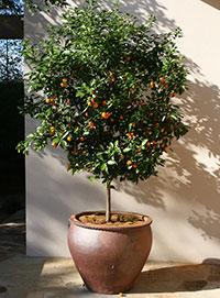 citrus gardening solutions