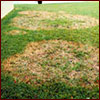 signs of brown patch in lawn