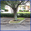 Large tree planted in a small green spot in a parking lot, its roots extended out and cracking through the pavement