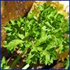Frilly green parsley leaf