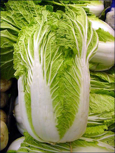Plant Id Vegetables Chinese Cabbage Florida Master