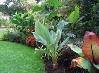 Suburban garden makeover mature 090