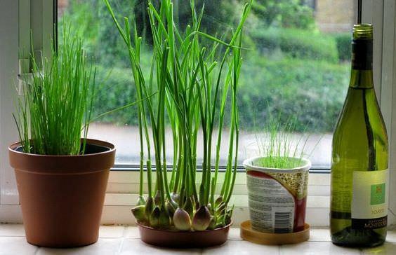 Growing Bamboo Outdoors