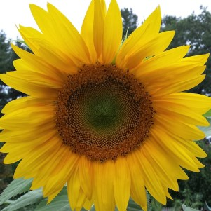 Day 4 - Hello Sunshine!