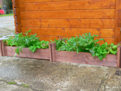 These FSC wooden beds are perfect for sowing herbs
