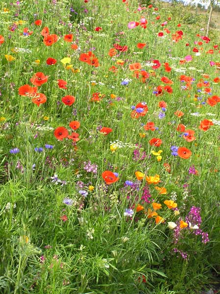 Instant Meadows Available to sow as Seeds