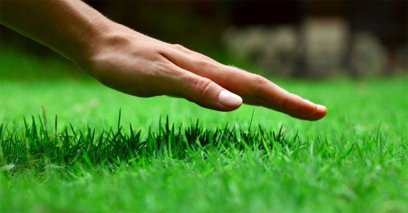 let the grass grow taller