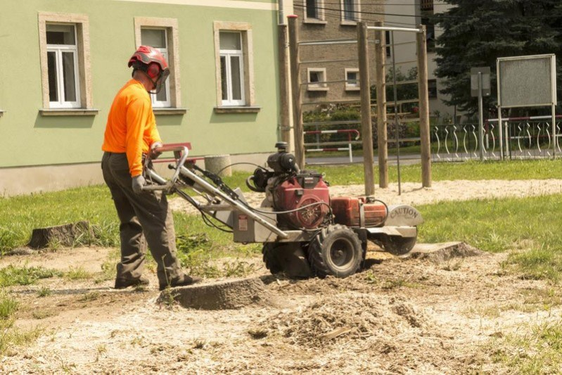stump removal with stump grinder