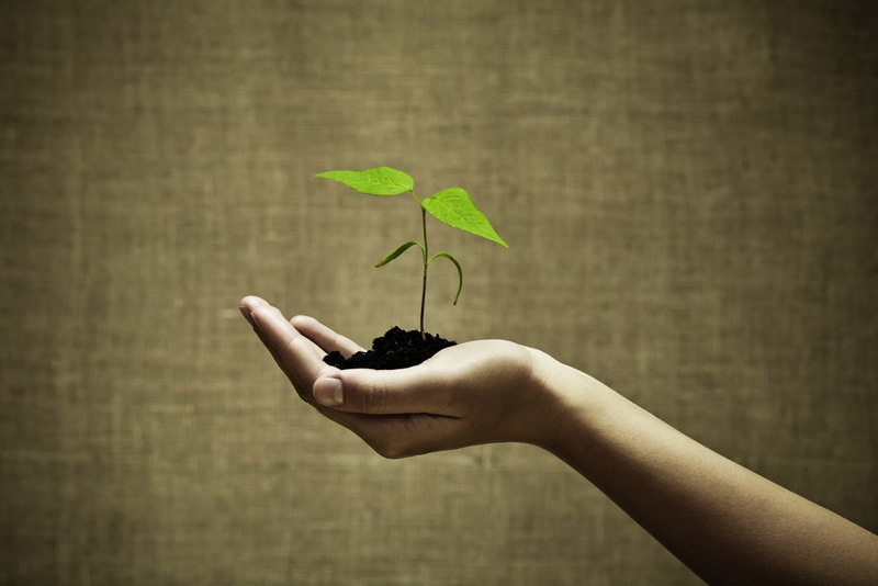 new green life