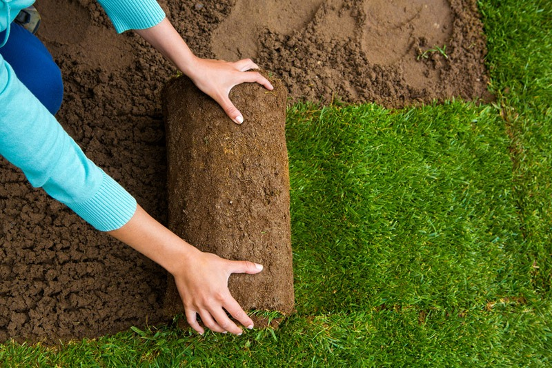 Advantages and Disadvantages of Sod