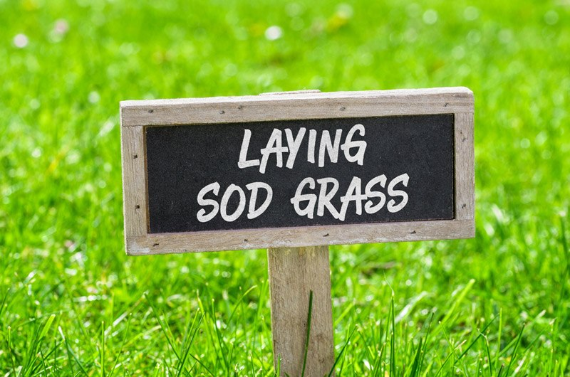 Time to Lay Sod
