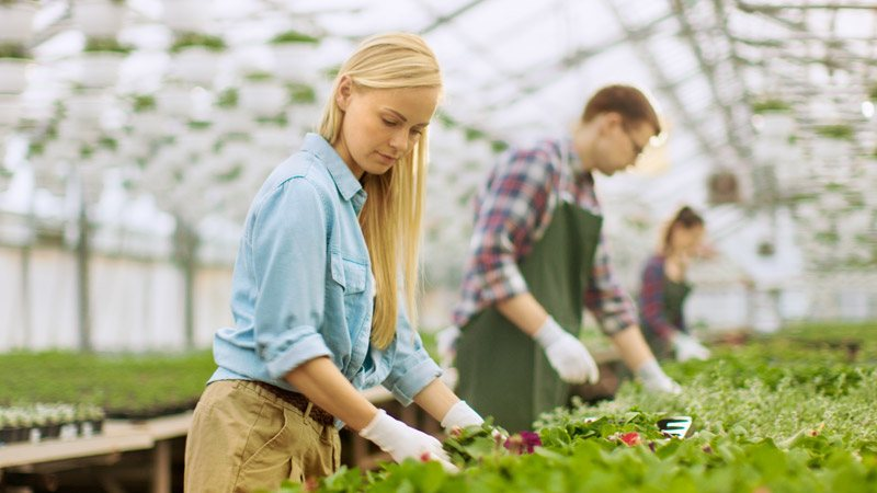 how are botany and horticulture different