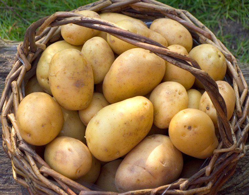 Type Of Potatoes