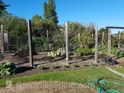 Adding compost to my winter garden.