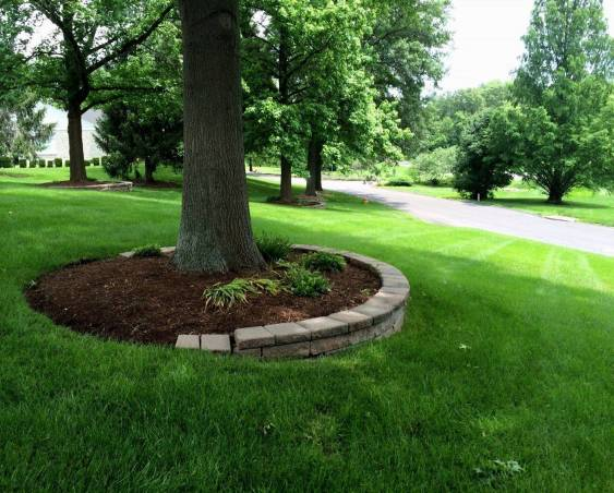 yard-mounds-with-tree