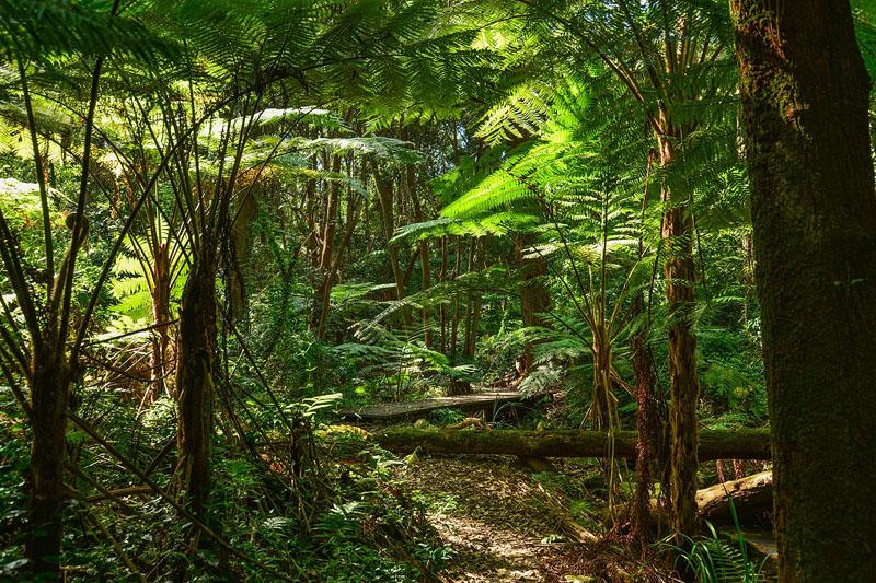 амазонка Тропические горные леса