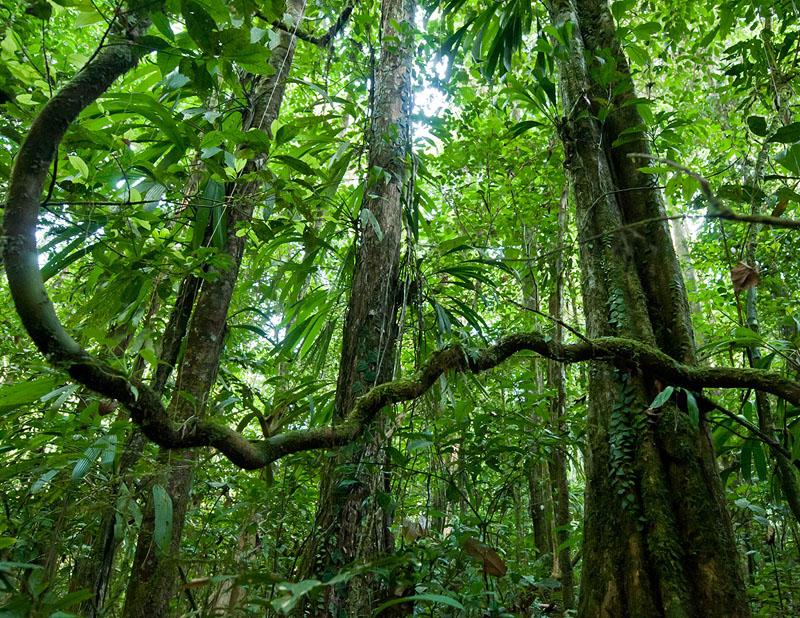 тропический лес лианы эпифиты