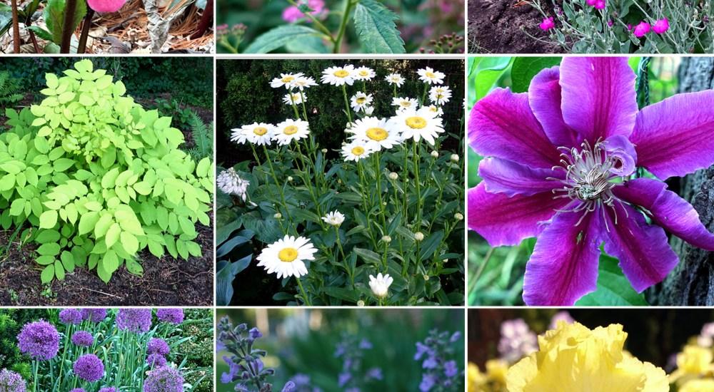 10 Proven Deer-Resistant Plants for Your Garden