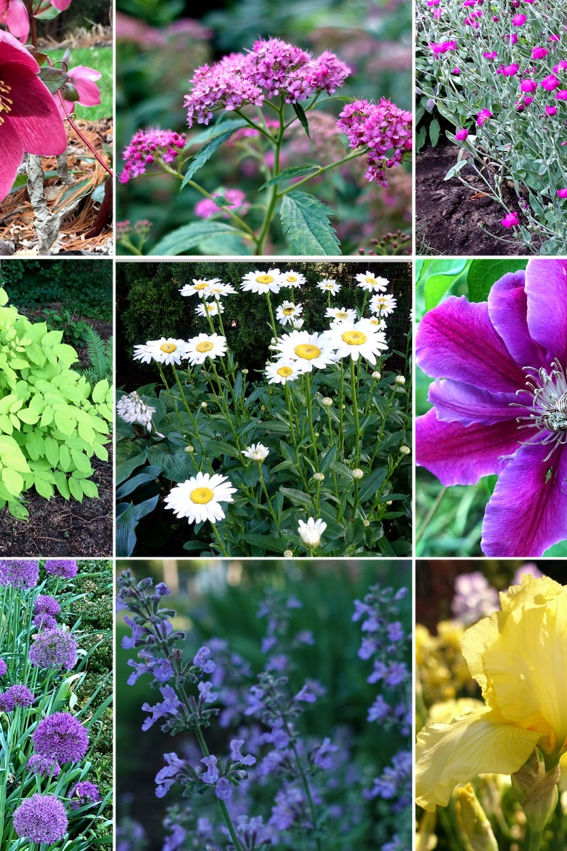 10 Proven Deer-Resistant Plants for Your Garden