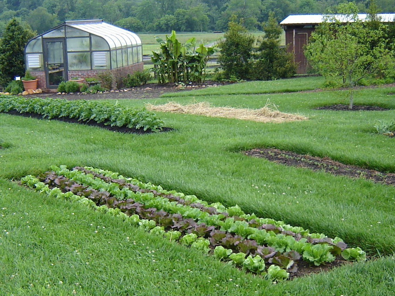 Narrow Strip Of Garden Vegetables In A Backyard Area