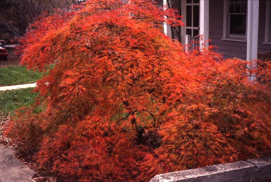 The Science Behind Fall Color – The Garden Professors™