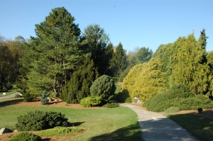 Entrance to the Harper Collection of Dwarf and Unusual Conifers