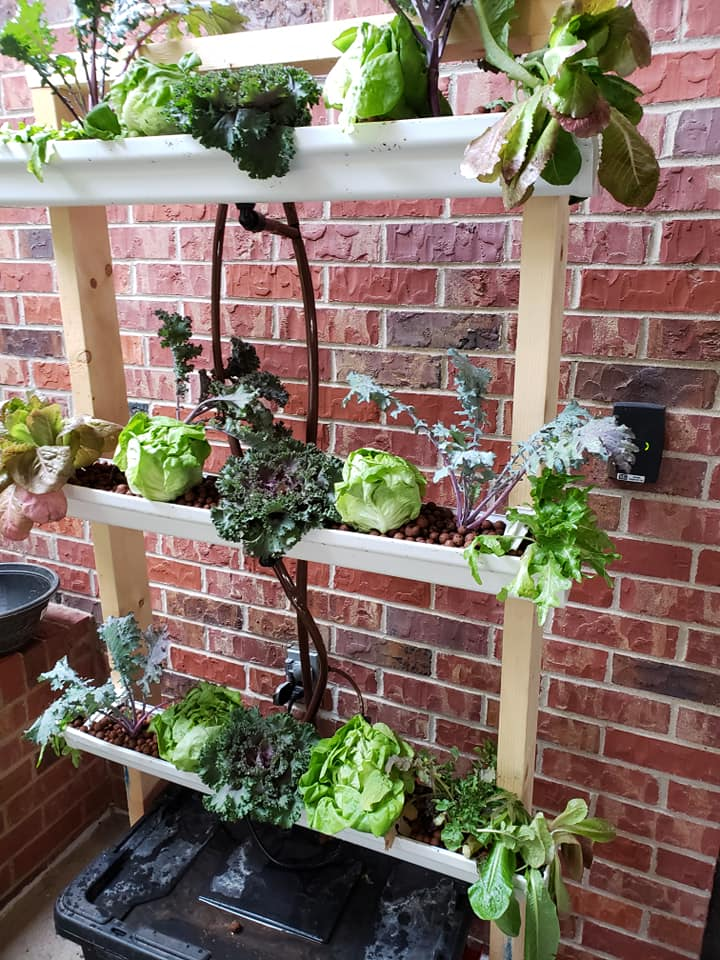 Diy Hydroponics Going Soil Less At Home And Abroad The Garden Professors
