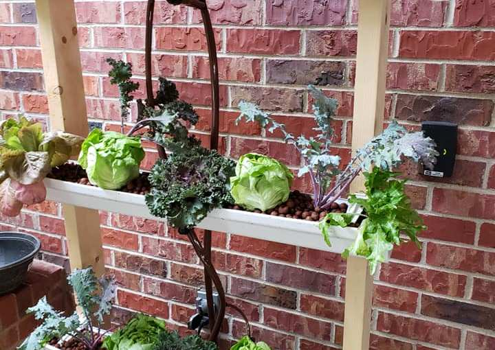 DIY Hydroponics: Going soil-less at home and abroad