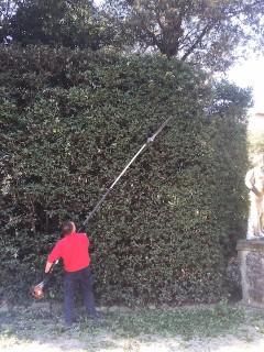 Hedges, Boboli