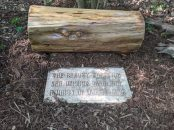 Natural benches are scattered throughout the Gardens, to give people places to rest and reflect in nature.