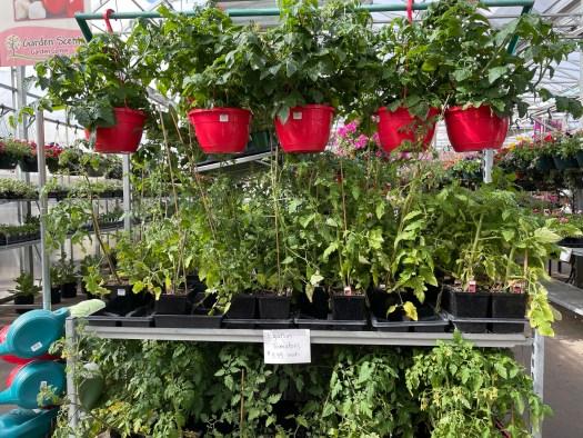 Tomatoes! 25% OFF reg price