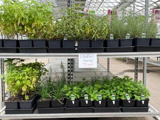 1 Gallon Herbs  $5.00 each