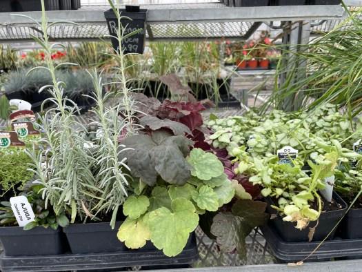 Perennials 40% off