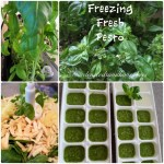 Freezing Fresh Pesto