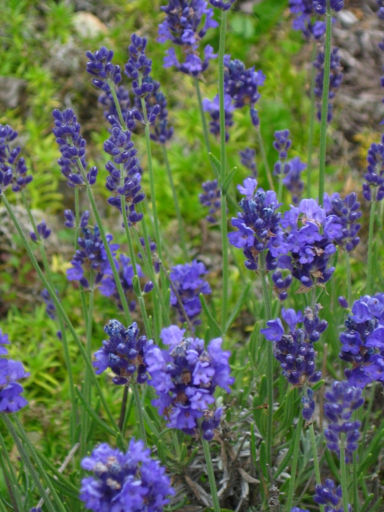 Simply The Best Herbs-January
