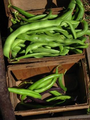 Green beans galore
