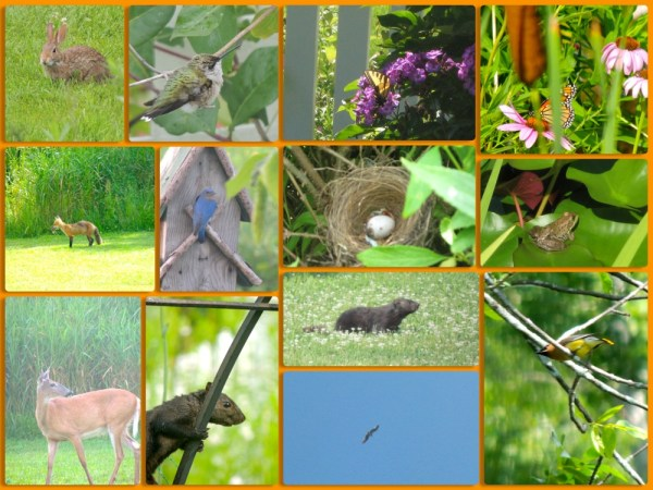 july critters