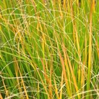 medium grass