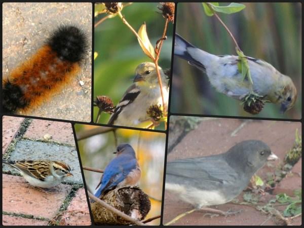 oct birds