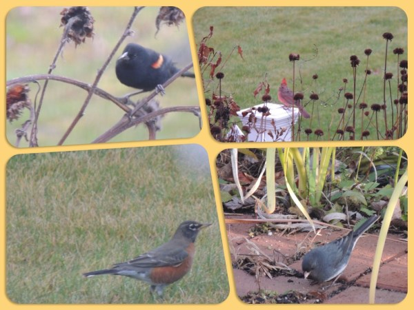 nov birds