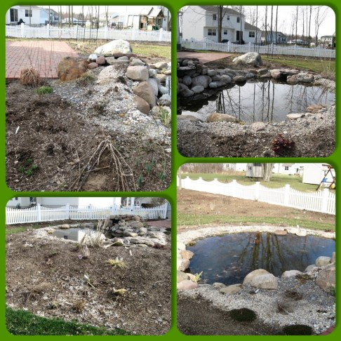 pond beginning