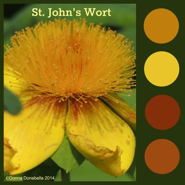 Simply The Best Natives-St. John's Wort